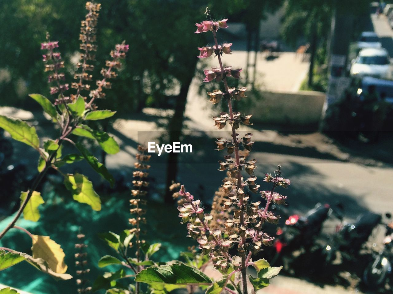 plant, growth, nature, no people, day, focus on foreground, flower, outdoors, tree, sunlight, leaf, beauty in nature, fragility, freshness, close-up