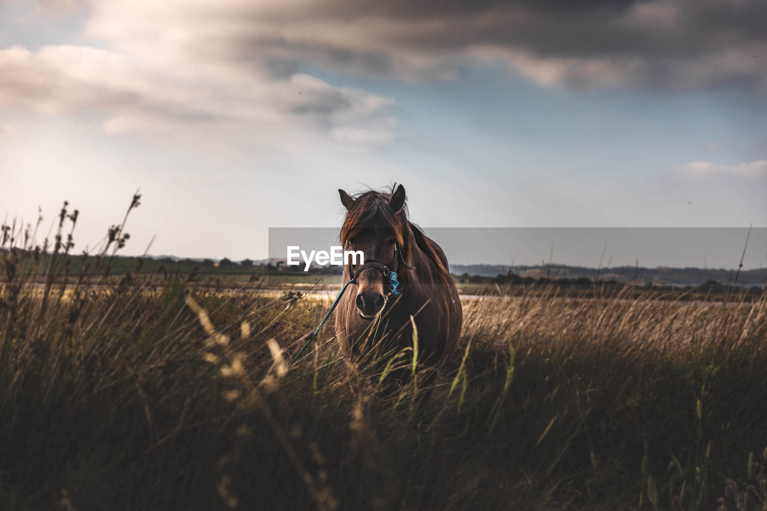 Horse in the fields