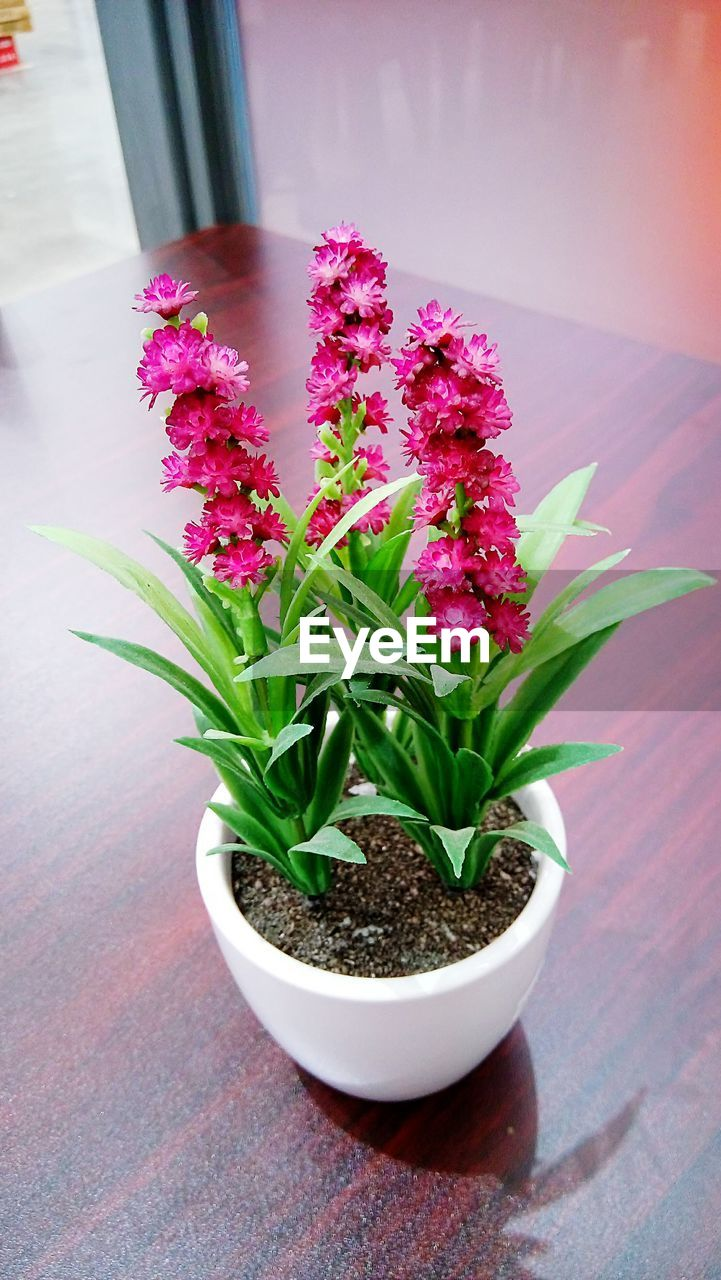 High Angle View Of Potted Pink Flowering Plant On Floor