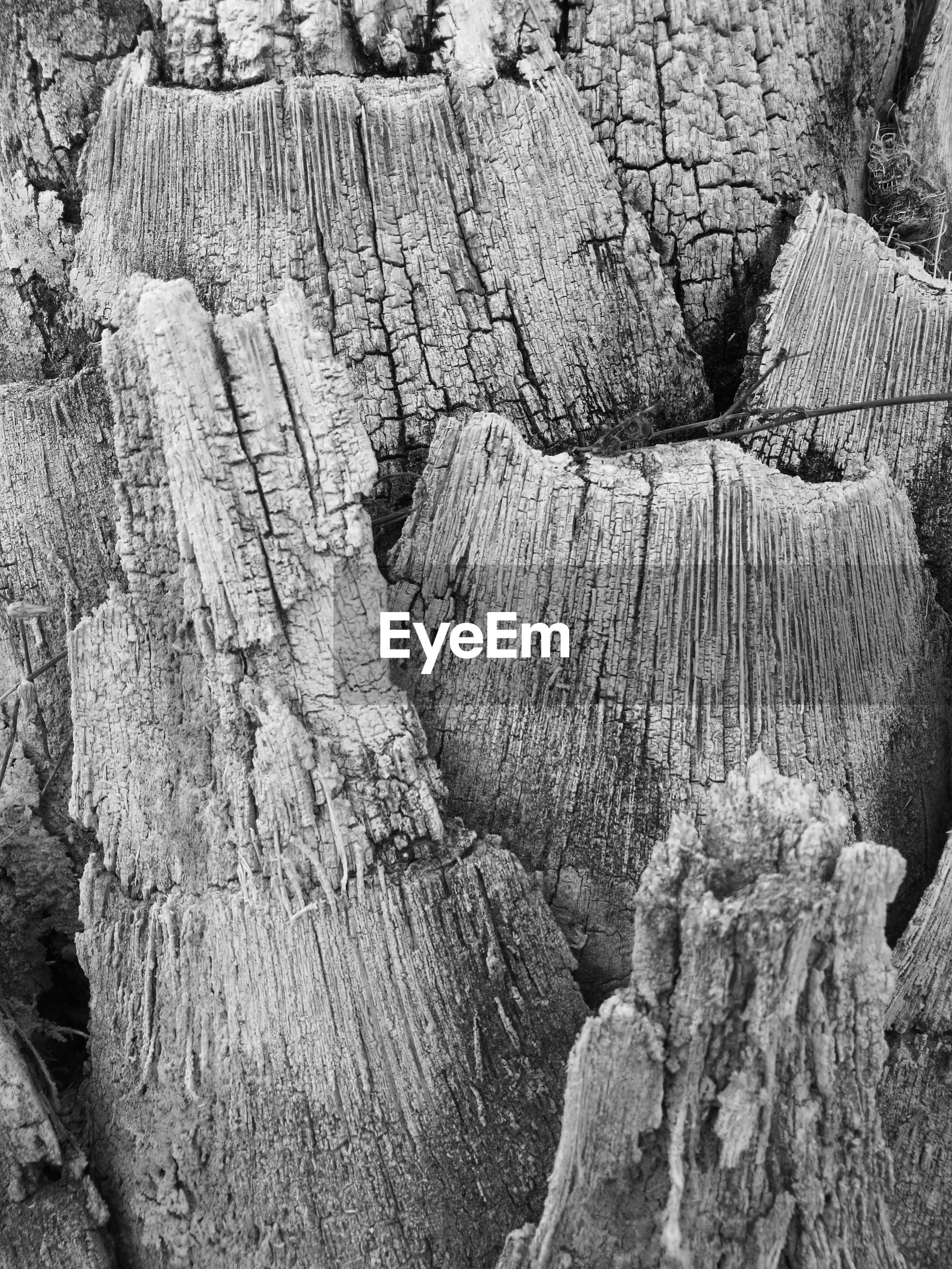 close-up, backgrounds, textured, full frame, tree trunk, wood - material, detail, rough, log, nature, woodland, outdoors, day, firewood, weathered, non-urban scene, rocky, no people, botany