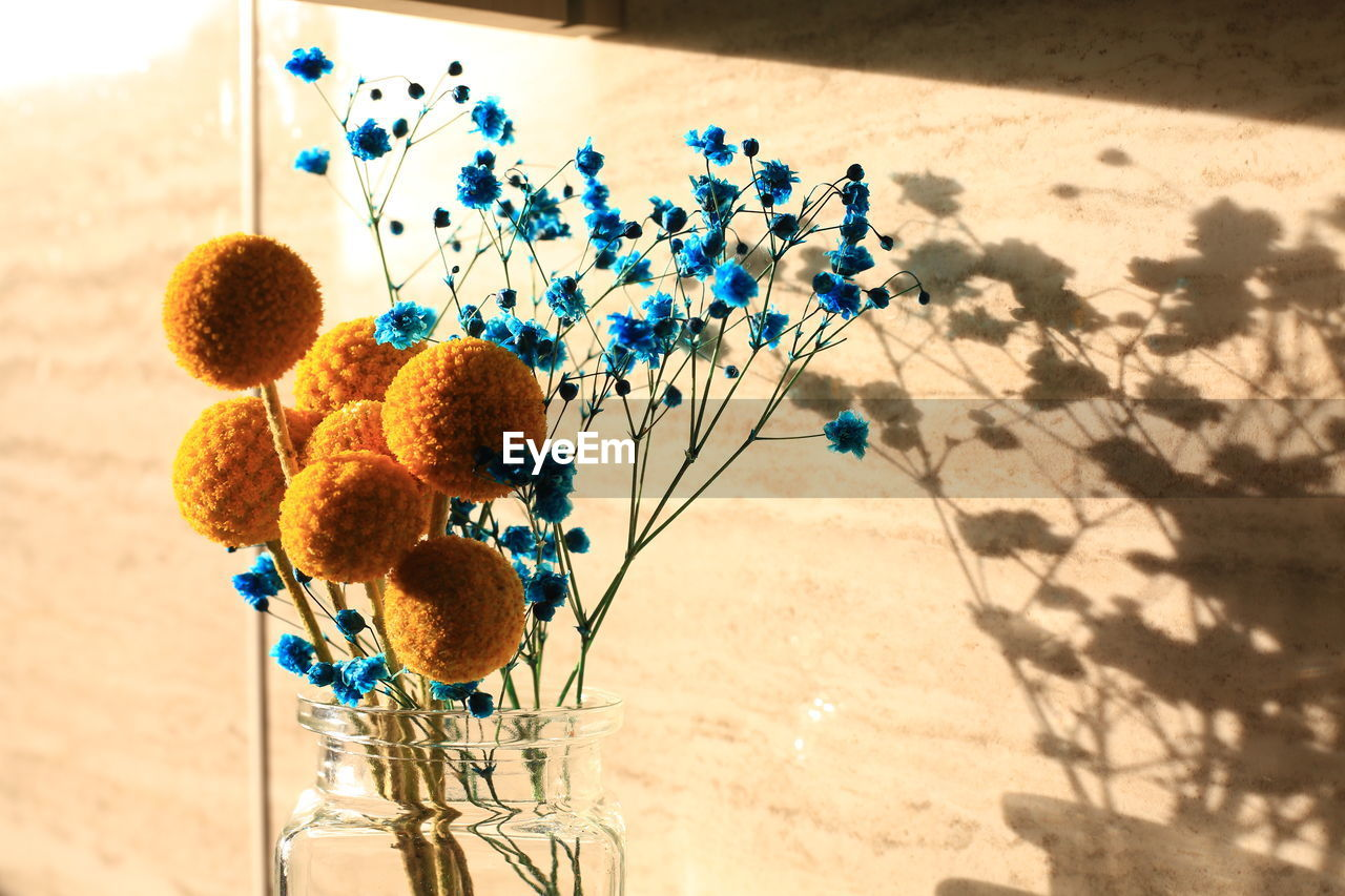 nature, shadow, plant, no people, sunlight, flower, flowering plant, day, vulnerability, growth, fragility, high angle view, freshness, beauty in nature, toy, outdoors, close-up, focus on foreground, yellow, plant stem, flower head
