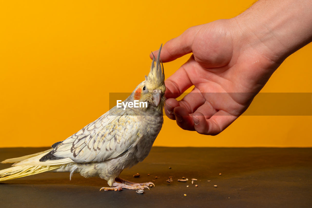 CLOSE-UP OF PERSON EATING BIRD