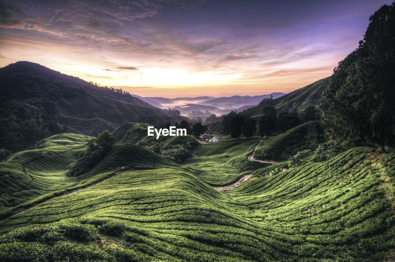 Idyllic shot of tea plantation against sky during sunrise