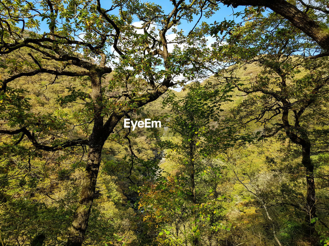 tree, plant, growth, forest, beauty in nature, nature, land, tranquility, no people, green color, branch, environment, day, tranquil scene, scenics - nature, non-urban scene, foliage, outdoors, landscape, lush foliage, woodland