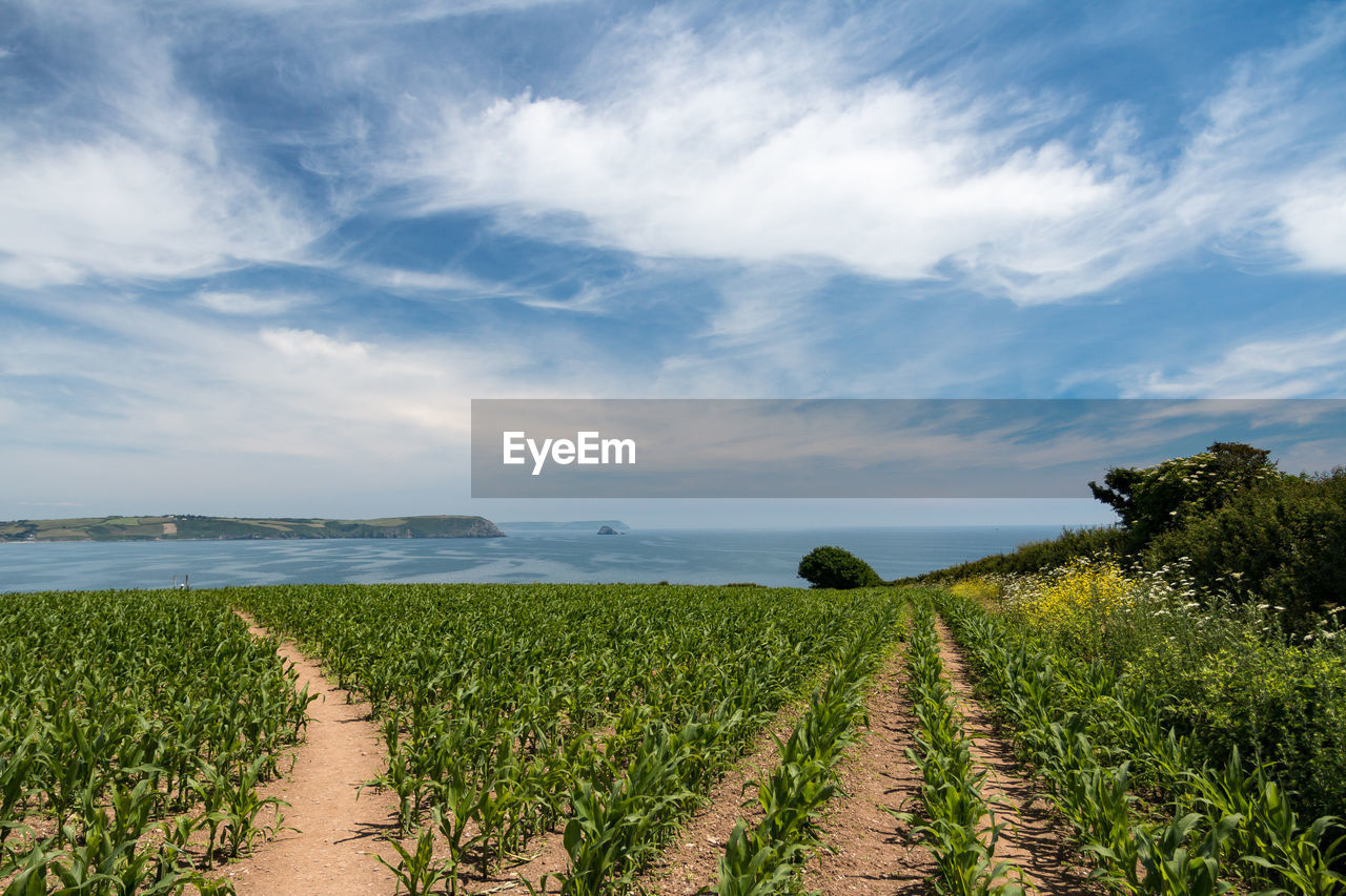plant, sky, cloud - sky, growth, scenics - nature, agriculture, land, field, tranquil scene, tranquility, landscape, beauty in nature, rural scene, nature, environment, crop, green color, day, farm, the way forward, no people, diminishing perspective, outdoors, winemaking, plantation