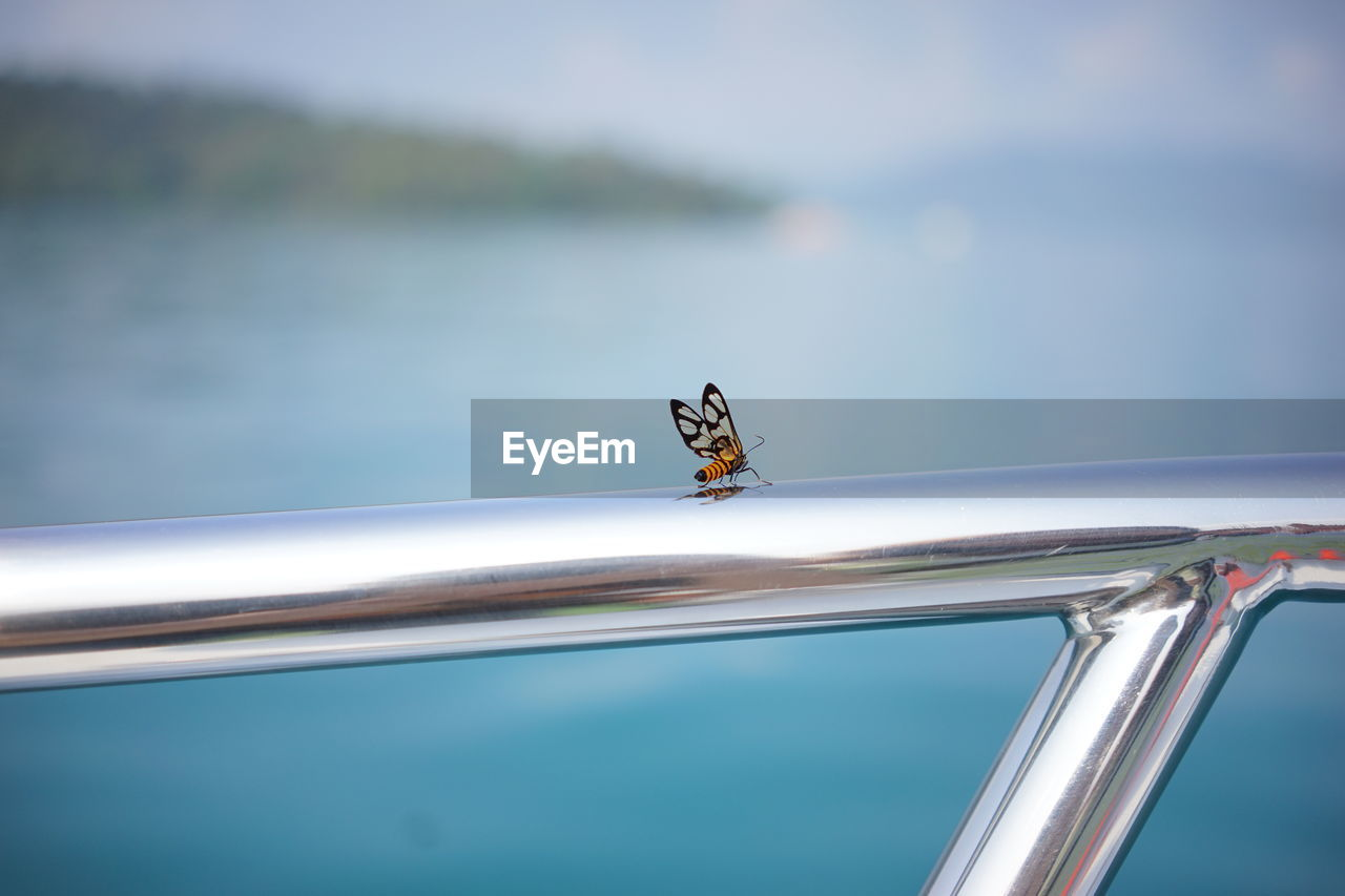 Close-up of butterfly on railing