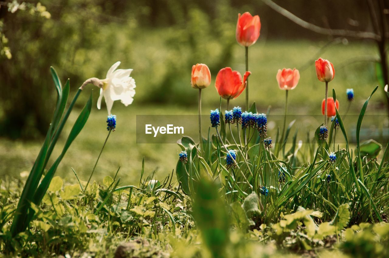 plant, flower, flowering plant, beauty in nature, growth, fragility, freshness, vulnerability, field, nature, land, selective focus, petal, close-up, no people, inflorescence, day, flower head, plant stem, green color, outdoors