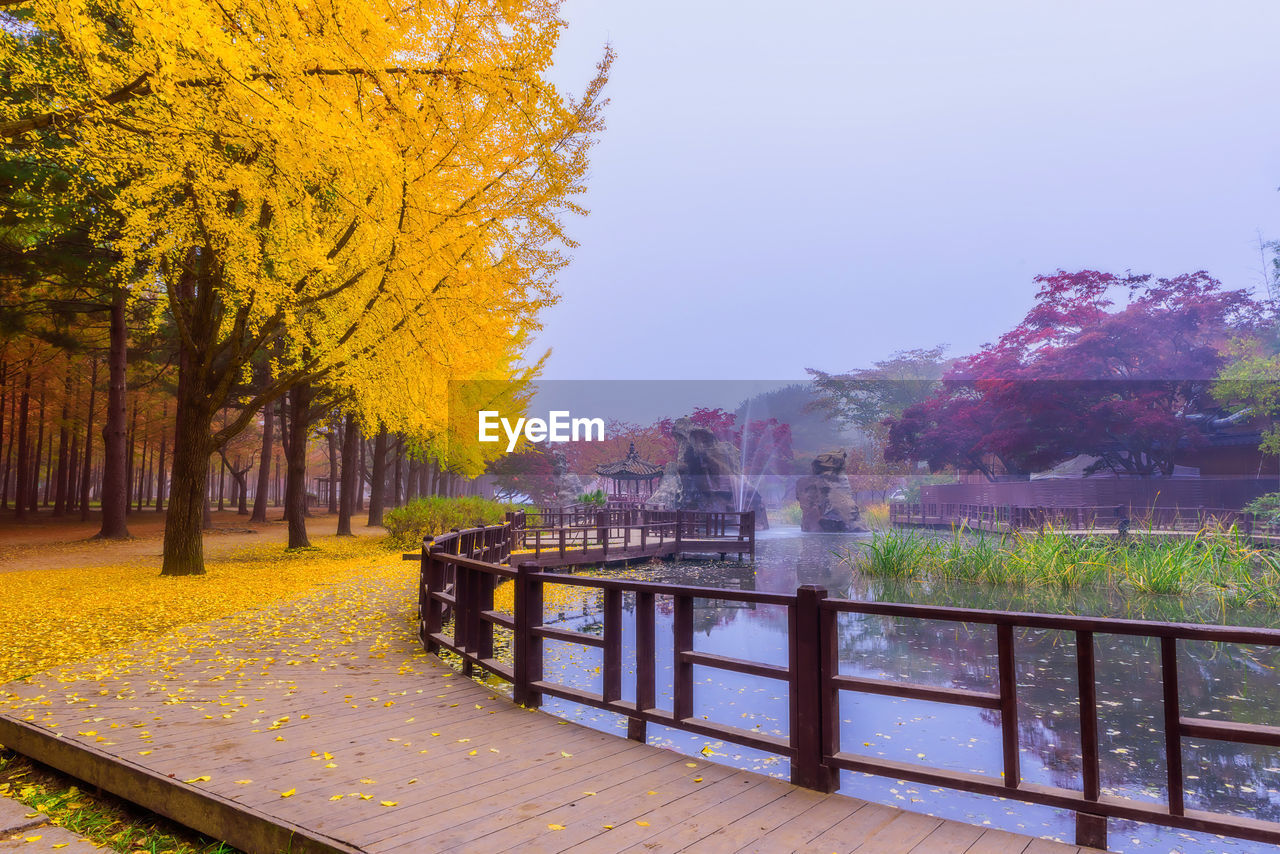 tree, plant, autumn, nature, change, water, railing, park, sky, day, park - man made space, beauty in nature, outdoors, architecture, footpath, no people, clear sky, growth, built structure