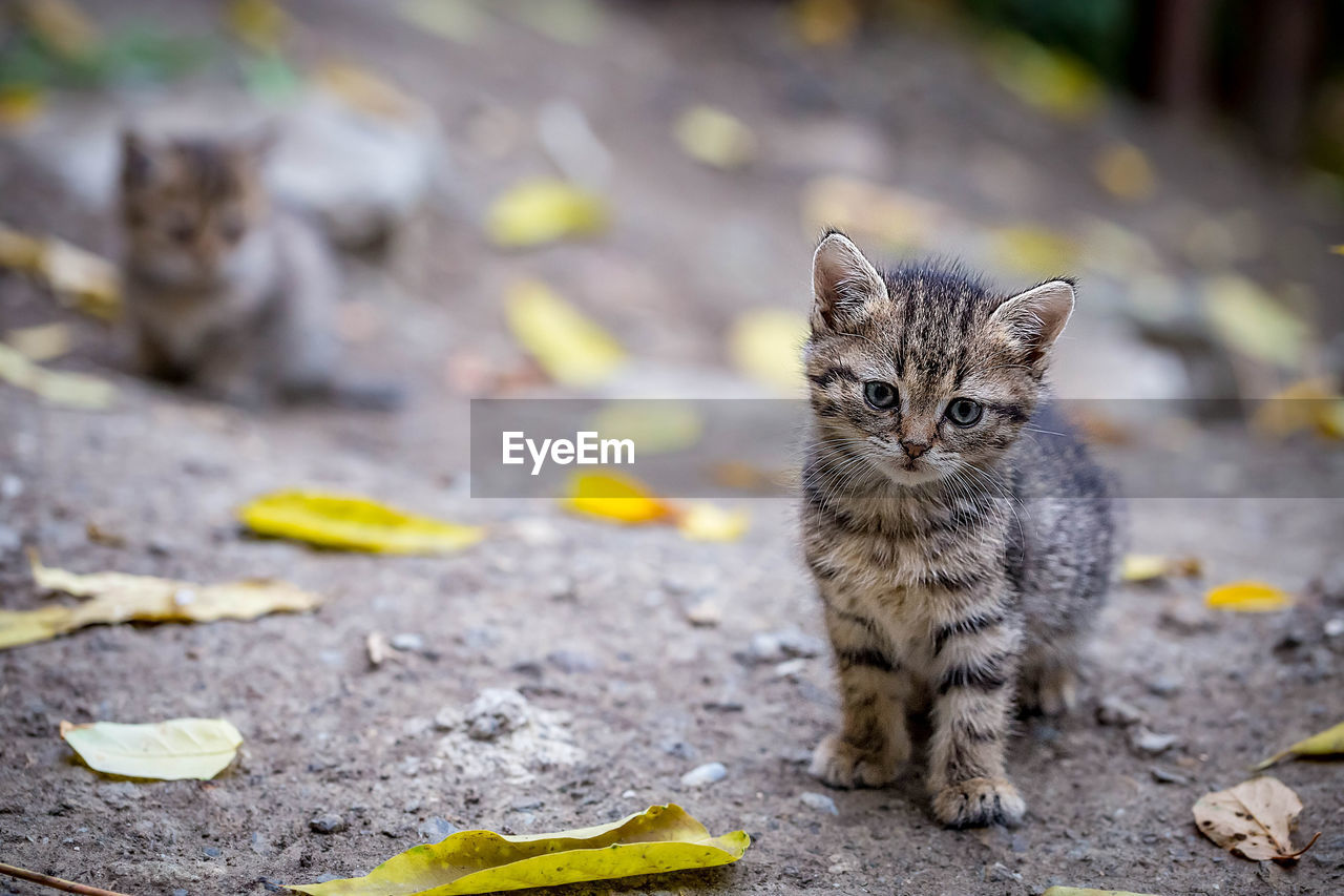 one animal, animal, animal themes, mammal, looking at camera, cat, domestic cat, vertebrate, feline, domestic, pets, no people, portrait, domestic animals, day, selective focus, sitting, focus on foreground, whisker, outdoors