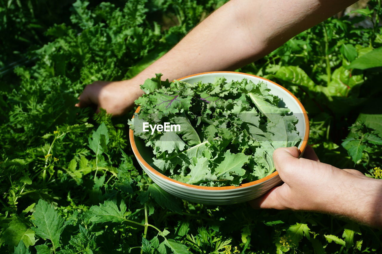 human hand, hand, green color, real people, human body part, one person, holding, food and drink, unrecognizable person, growth, food, plant, lifestyles, leaf, nature, high angle view, plant part, freshness, day, finger, outdoors, herb, gardening