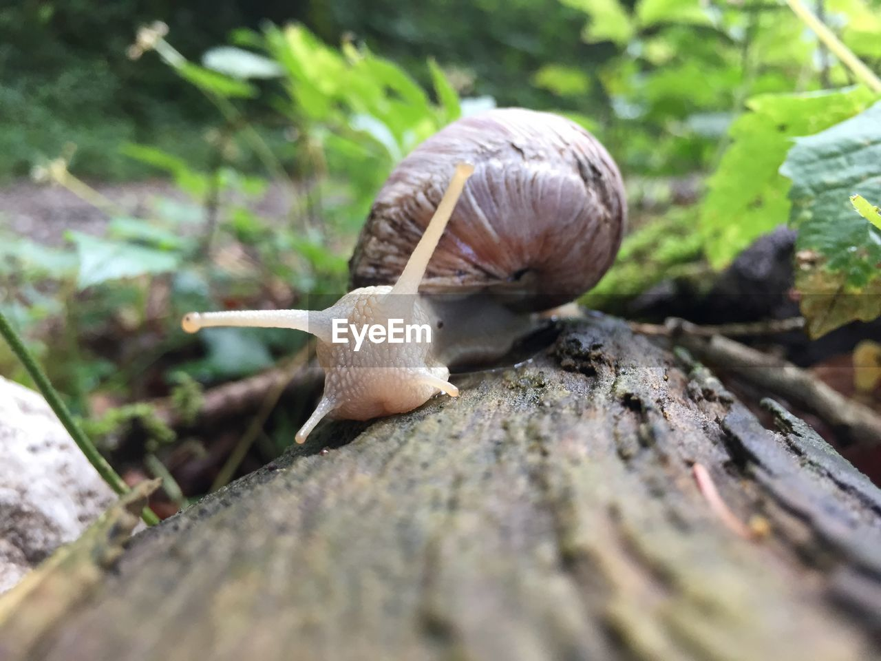gastropod, animal, animal themes, mollusk, selective focus, one animal, snail, animal wildlife, animals in the wild, close-up, invertebrate, shell, day, no people, nature, animal antenna, animal body part, animal shell, slimy, plant, crawling, surface level, toadstool