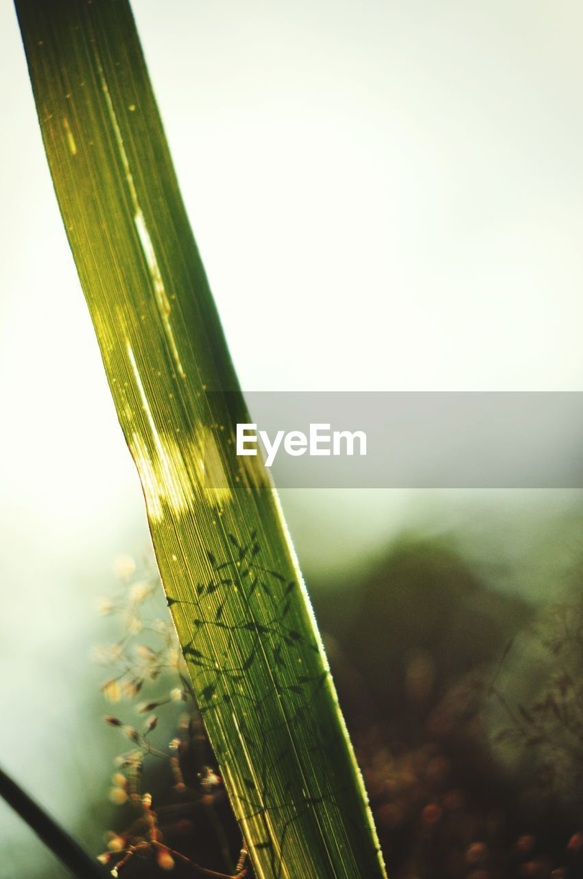focus on foreground, green color, close-up, nature, no people, plant, day, growth, drop, outdoors, sky, blade of grass, beauty in nature, selective focus, freshness, copy space, leaf, water, tranquility, plant part, bamboo - plant, dew