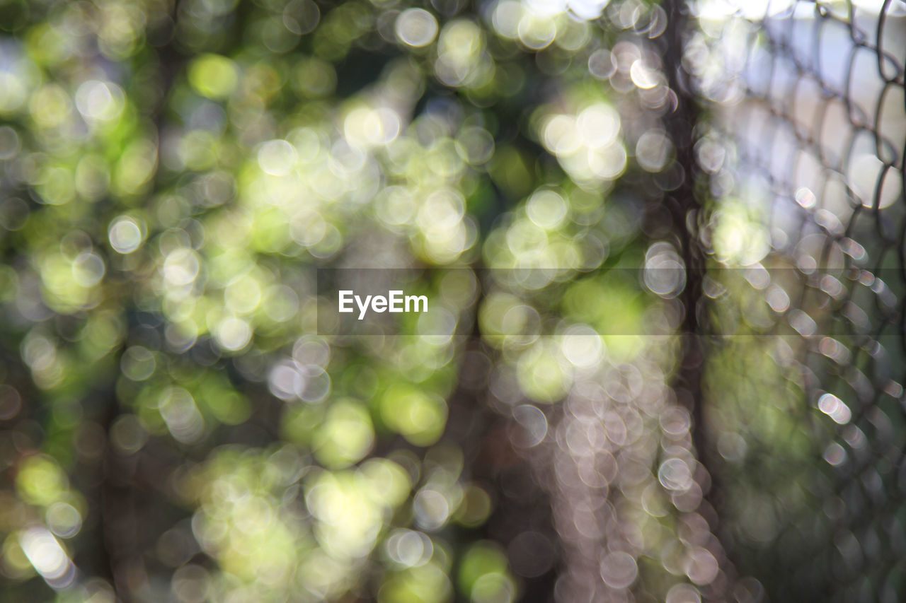 Defocused image of fence by trees