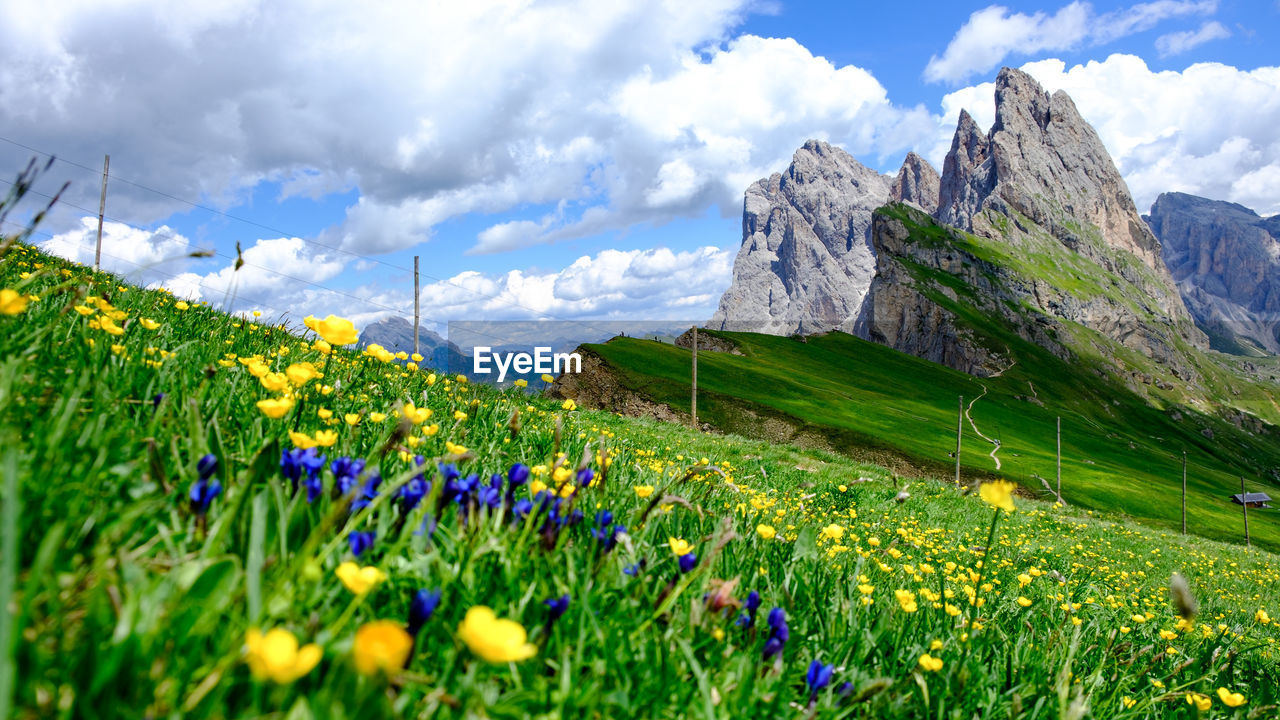 flower, plant, beauty in nature, flowering plant, cloud - sky, sky, land, mountain, field, nature, grass, landscape, scenics - nature, green color, growth, tranquility, day, tranquil scene, environment, freshness, no people, mountain range, outdoors