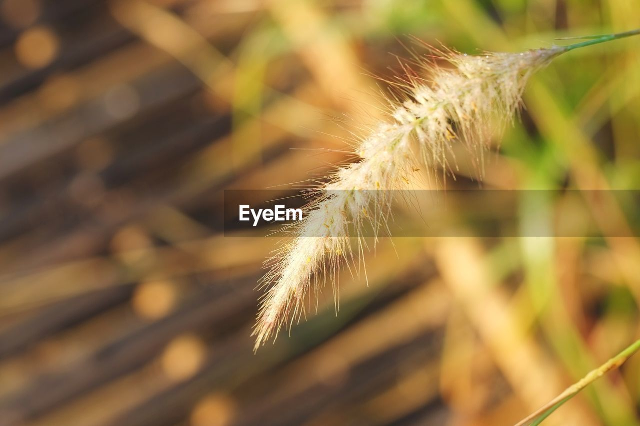plant, close-up, nature, focus on foreground, growth, selective focus, day, no people, beauty in nature, outdoors, fragility, sunlight, grass, vulnerability, agriculture, crop, plant stem, field, land, cereal plant, softness