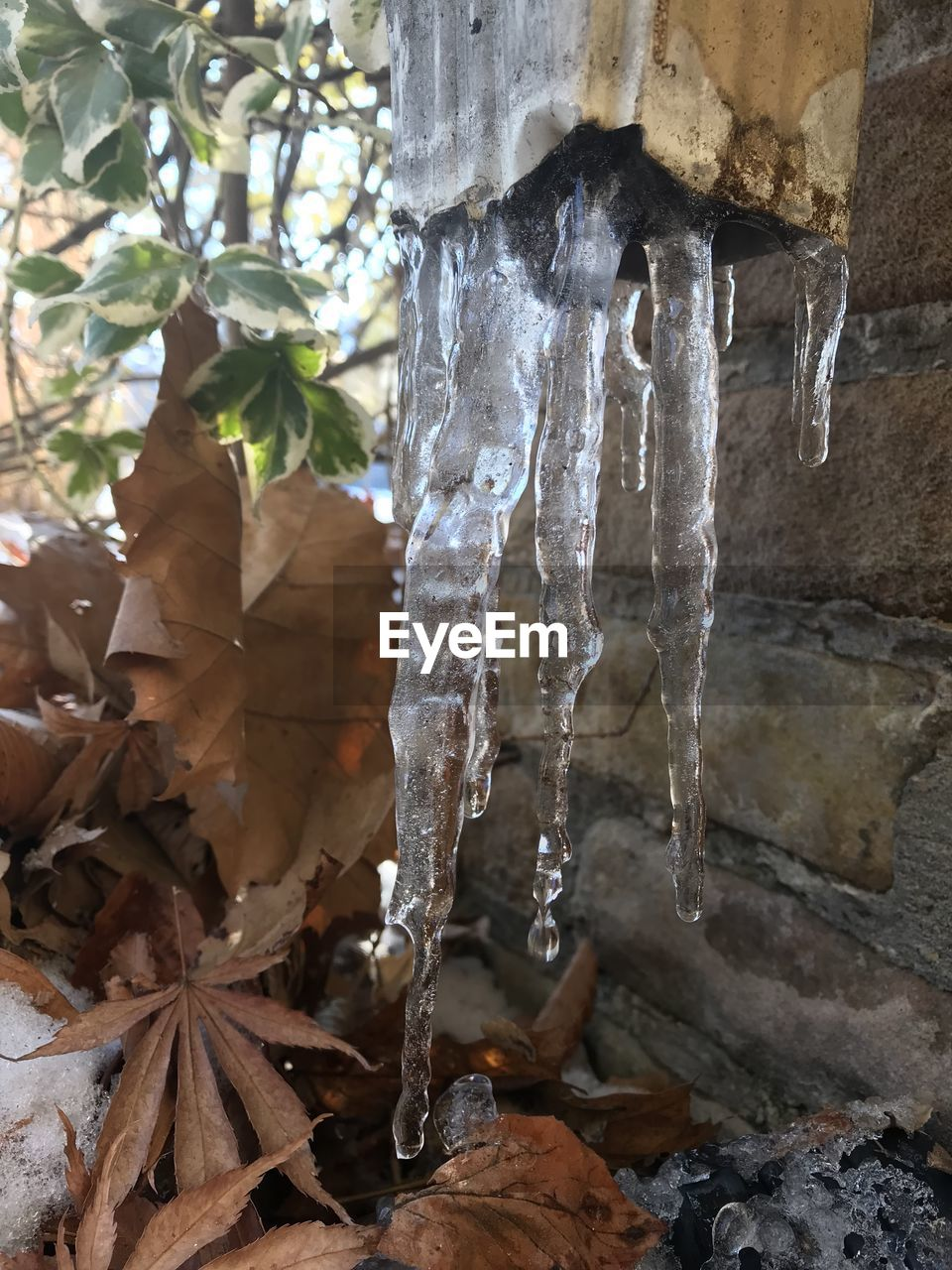 cold temperature, day, nature, no people, winter, ice, icicle, outdoors, leaf, low angle view, beauty in nature, close-up, water, freshness