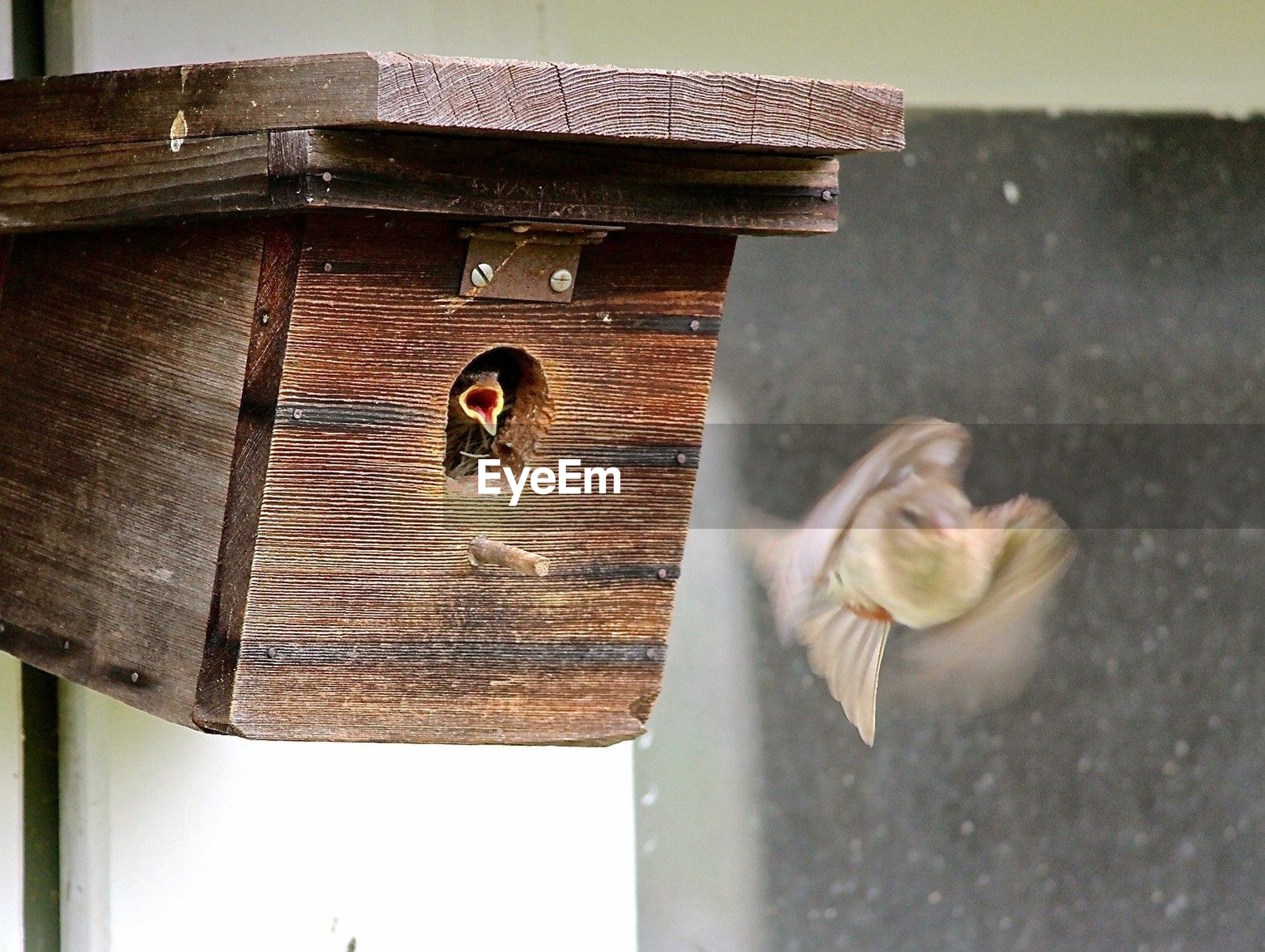 animal themes, one animal, pets, animals in the wild, wood - material, outdoors, day, no people, bird, mammal, birdhouse, close-up