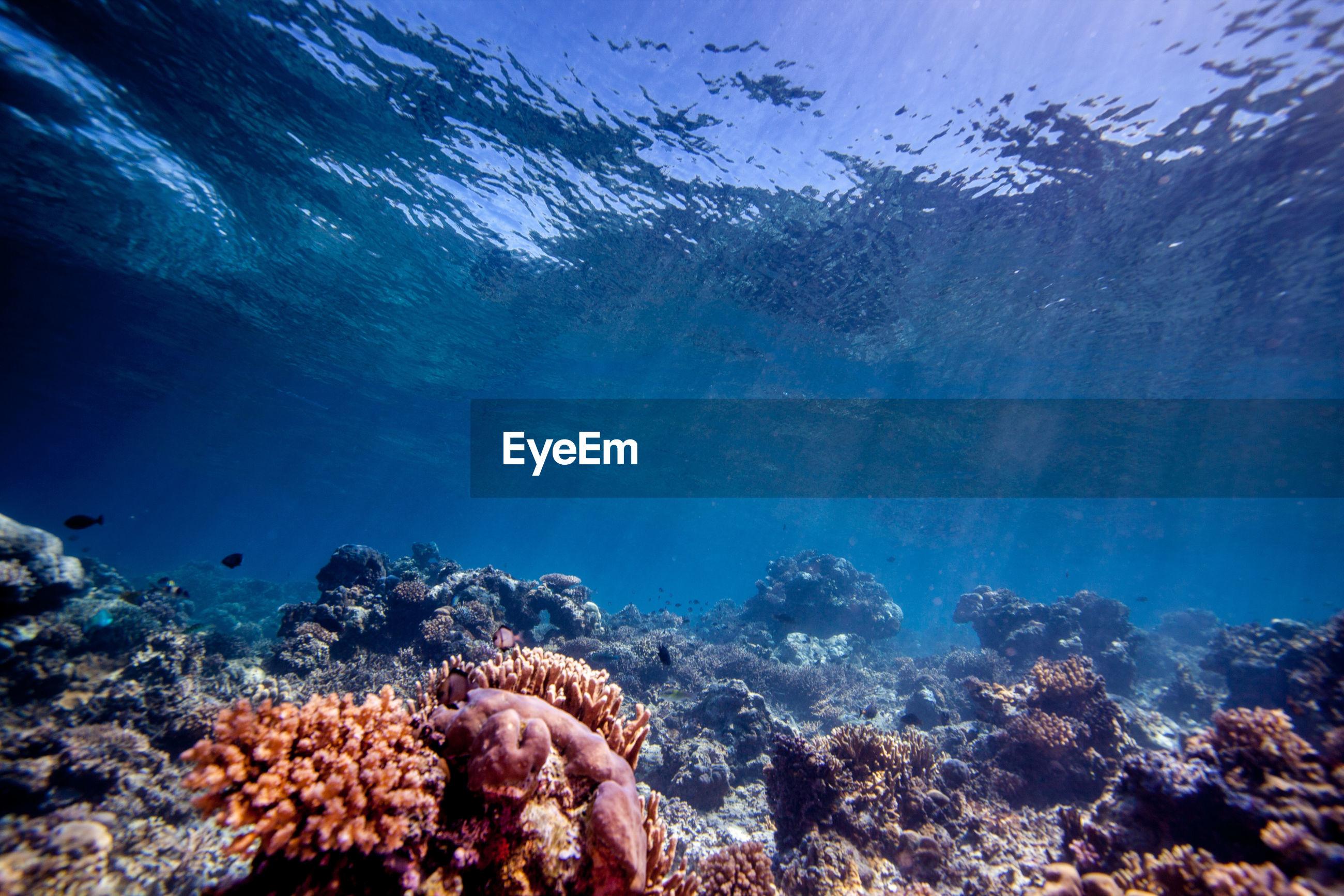 Multi colored corals underwater