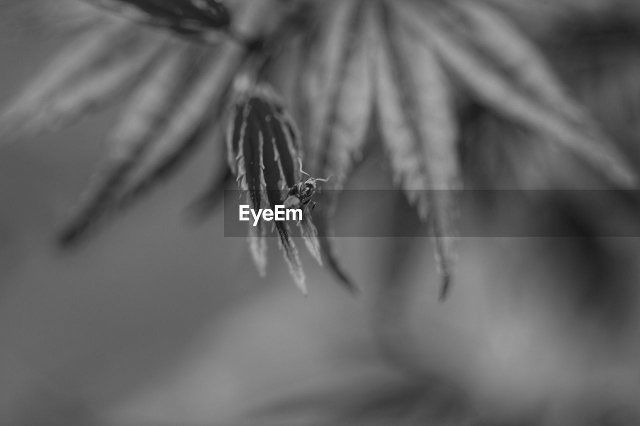 close-up, selective focus, plant, no people, growth, beauty in nature, nature, vulnerability, day, fragility, plant part, leaf, flower, dry, outdoors, tranquility, focus on foreground, freshness, flowering plant, plant stem, wilted plant, leaves, coniferous tree