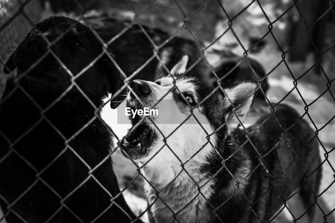 fence, animal, animal themes, boundary, mammal, barrier, vertebrate, one animal, domestic animals, focus on foreground, chainlink fence, domestic, no people, security, close-up, pets, animal body part, protection, safety, livestock, animal head, outdoors, herbivorous