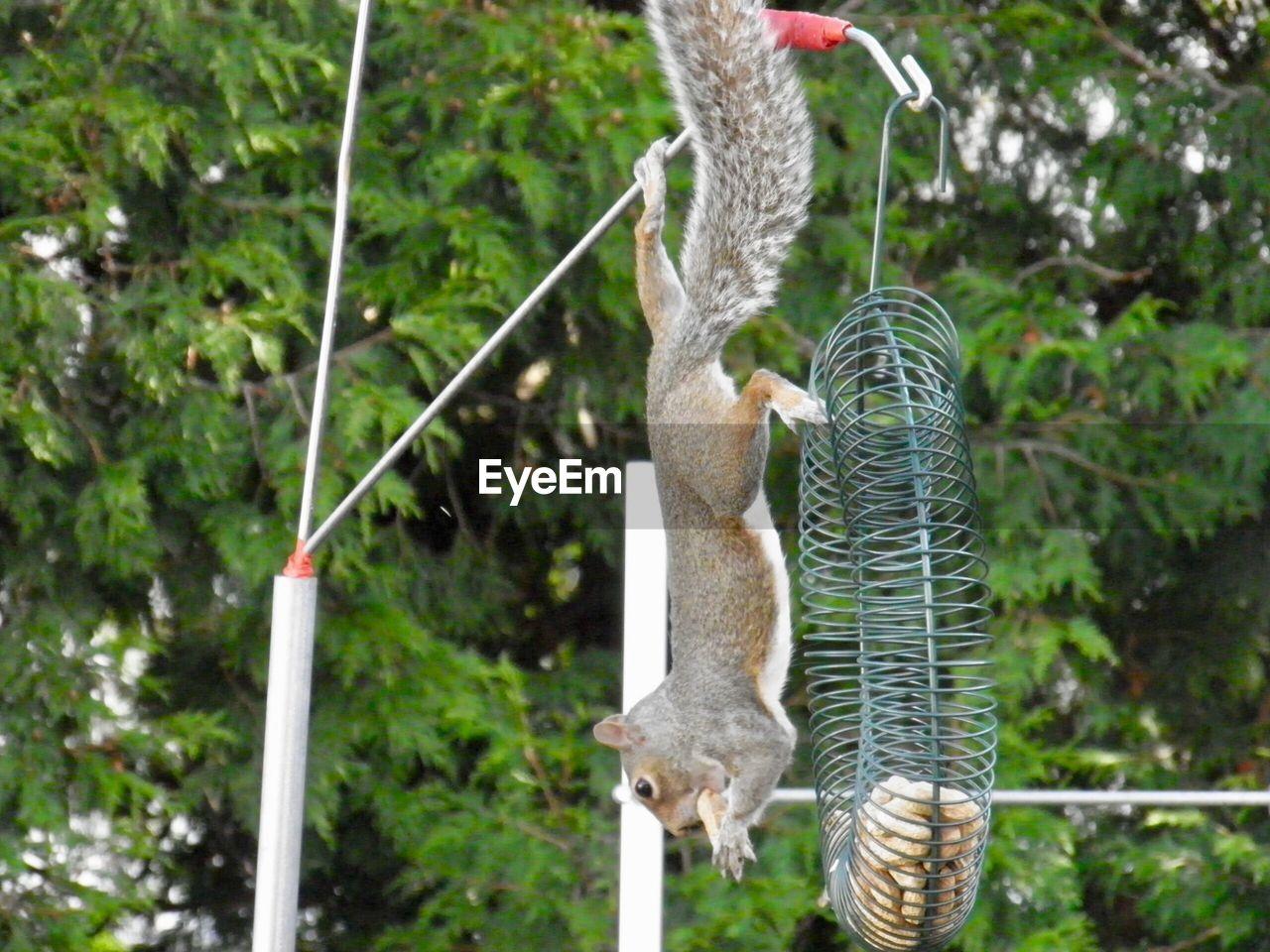 focus on foreground, animal themes, animal, hanging, day, nature, plant, no people, animal wildlife, vertebrate, one animal, tree, animals in the wild, rope, outdoors, close-up, bird feeder, bird, climbing