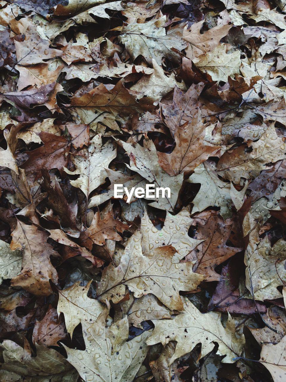 Full frame shot of fallen leaves