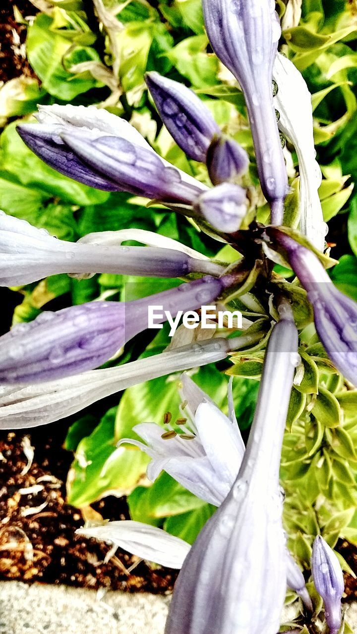 purple, plant, growth, day, vegetable, close-up, no people, outdoors, nature, freshness, fragility, flower, flower head
