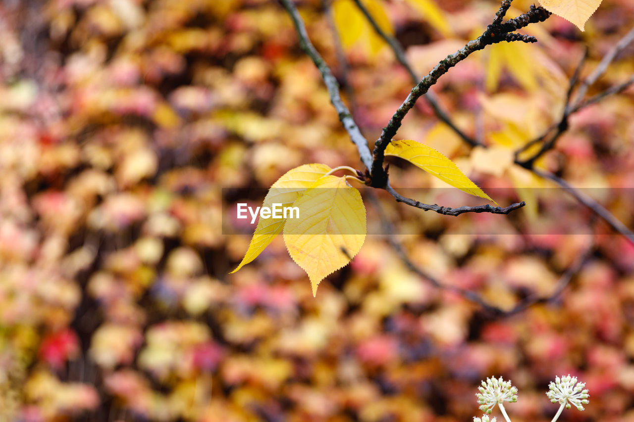 plant, flowering plant, flower, beauty in nature, close-up, fragility, vulnerability, growth, focus on foreground, yellow, petal, freshness, autumn, nature, no people, leaf, plant part, day, flower head, inflorescence, outdoors, change, springtime, leaves, natural condition