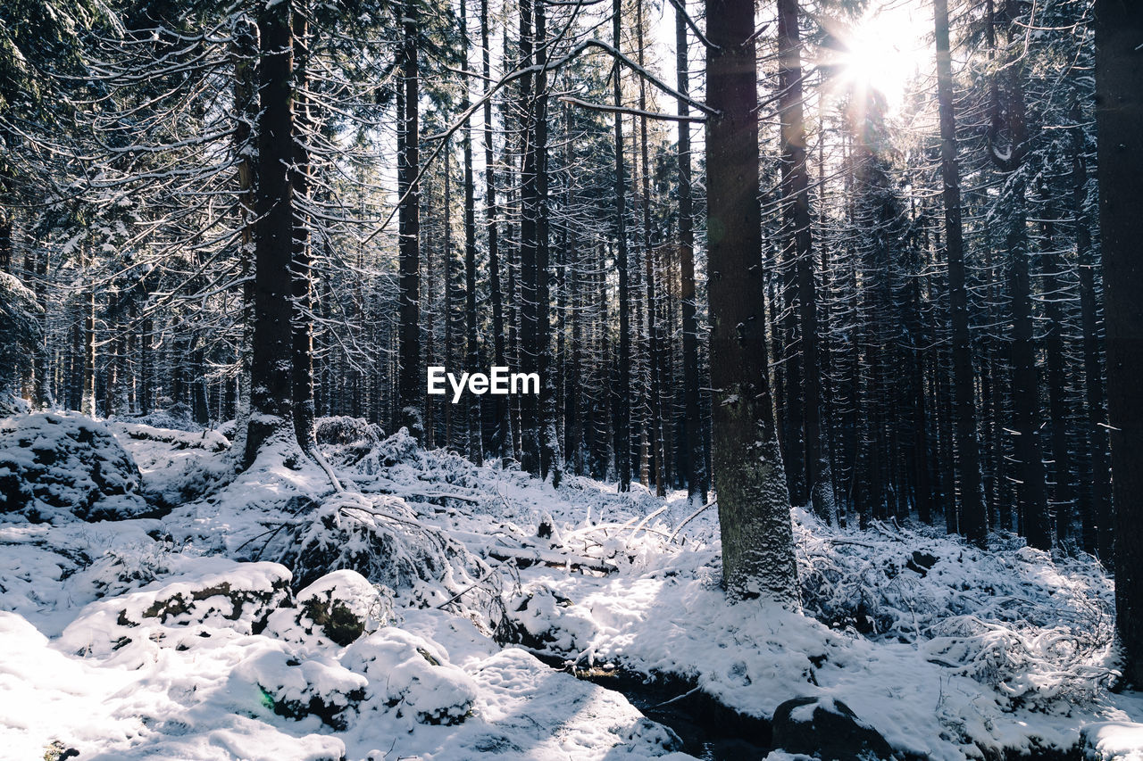 Frozen Trees In Forest During Winter