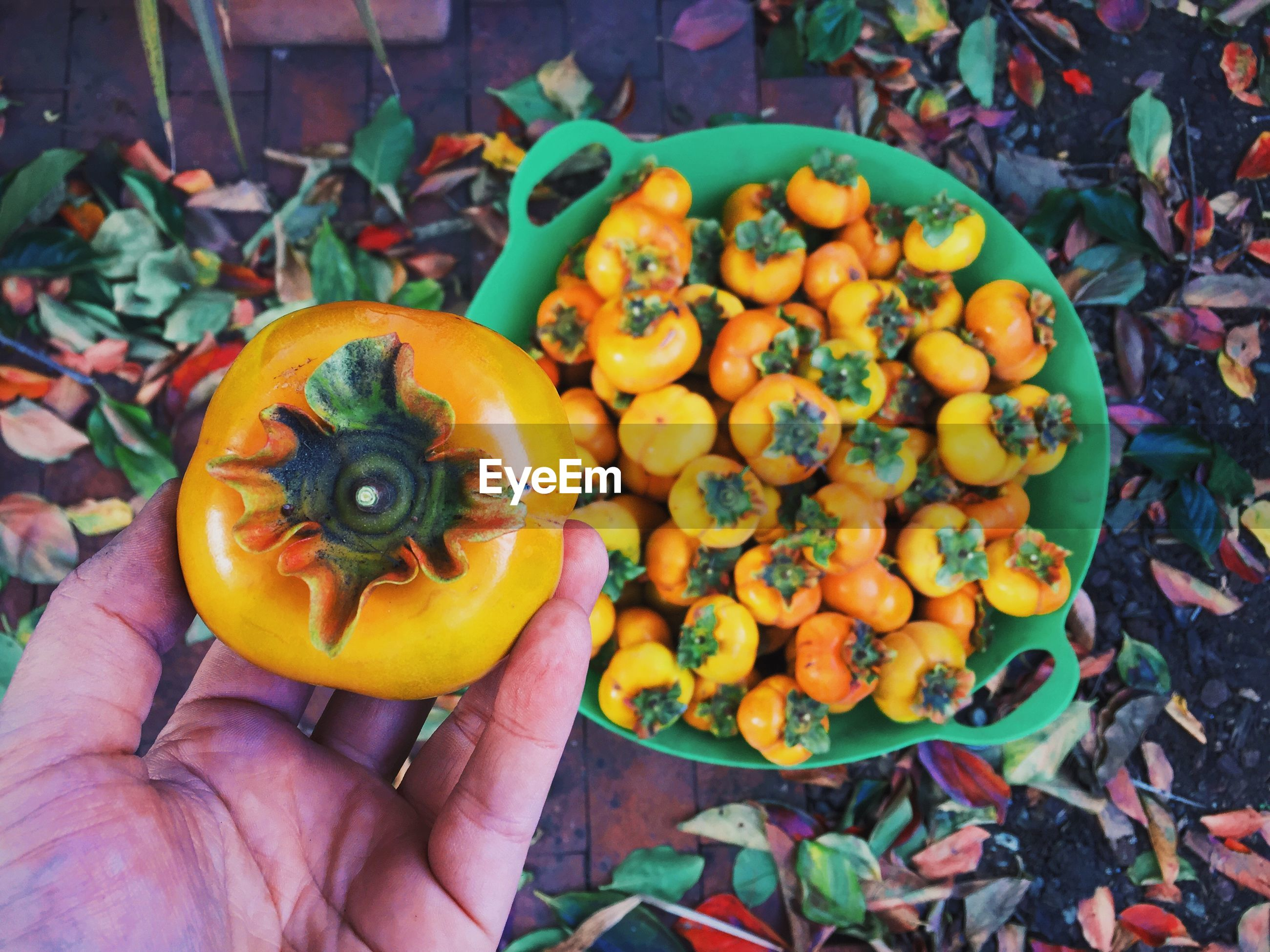 Cropped hand of person holding fresh persimmon over full basket