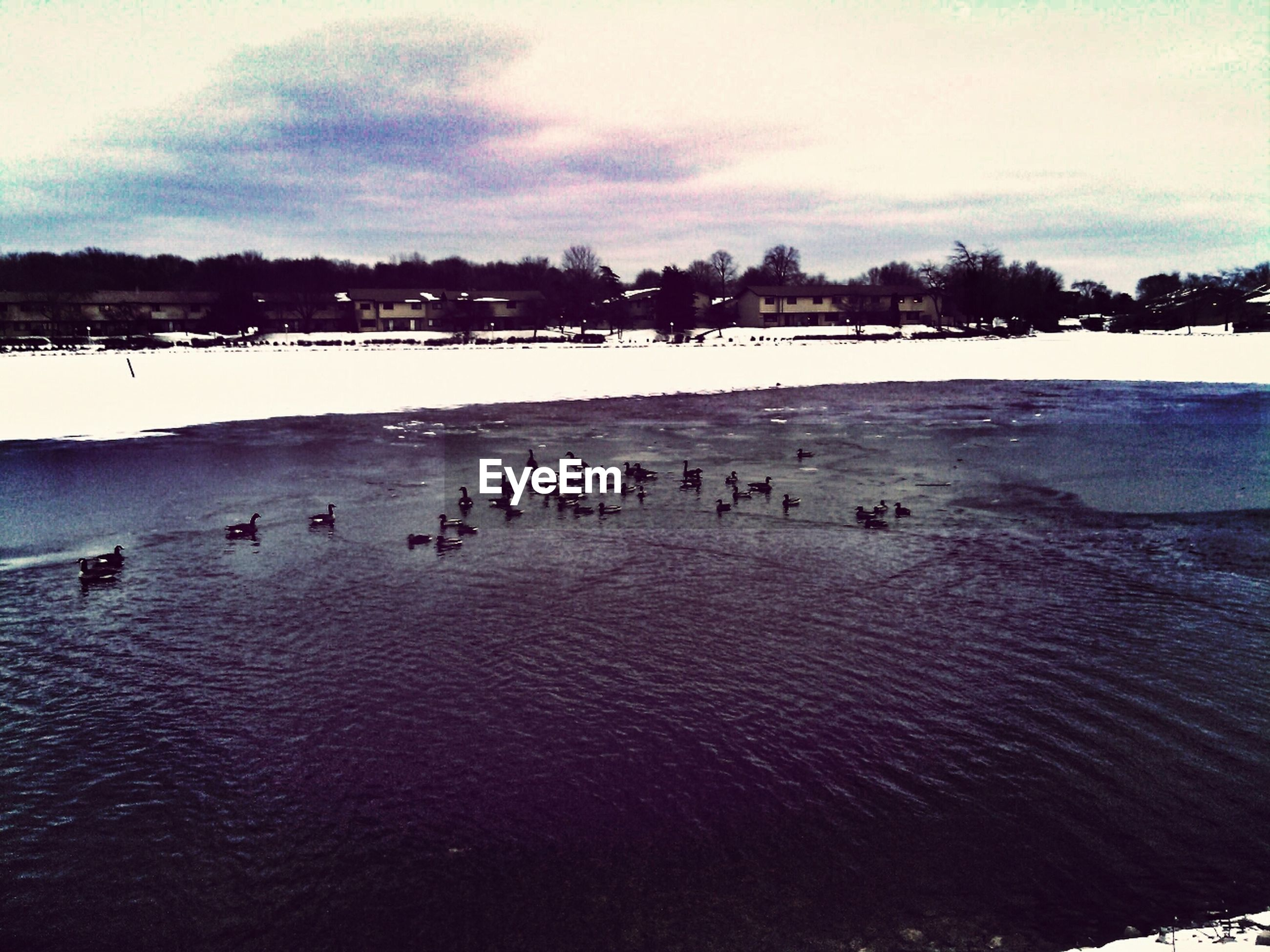 High angle view of ducks swimming in lake against sky during winter