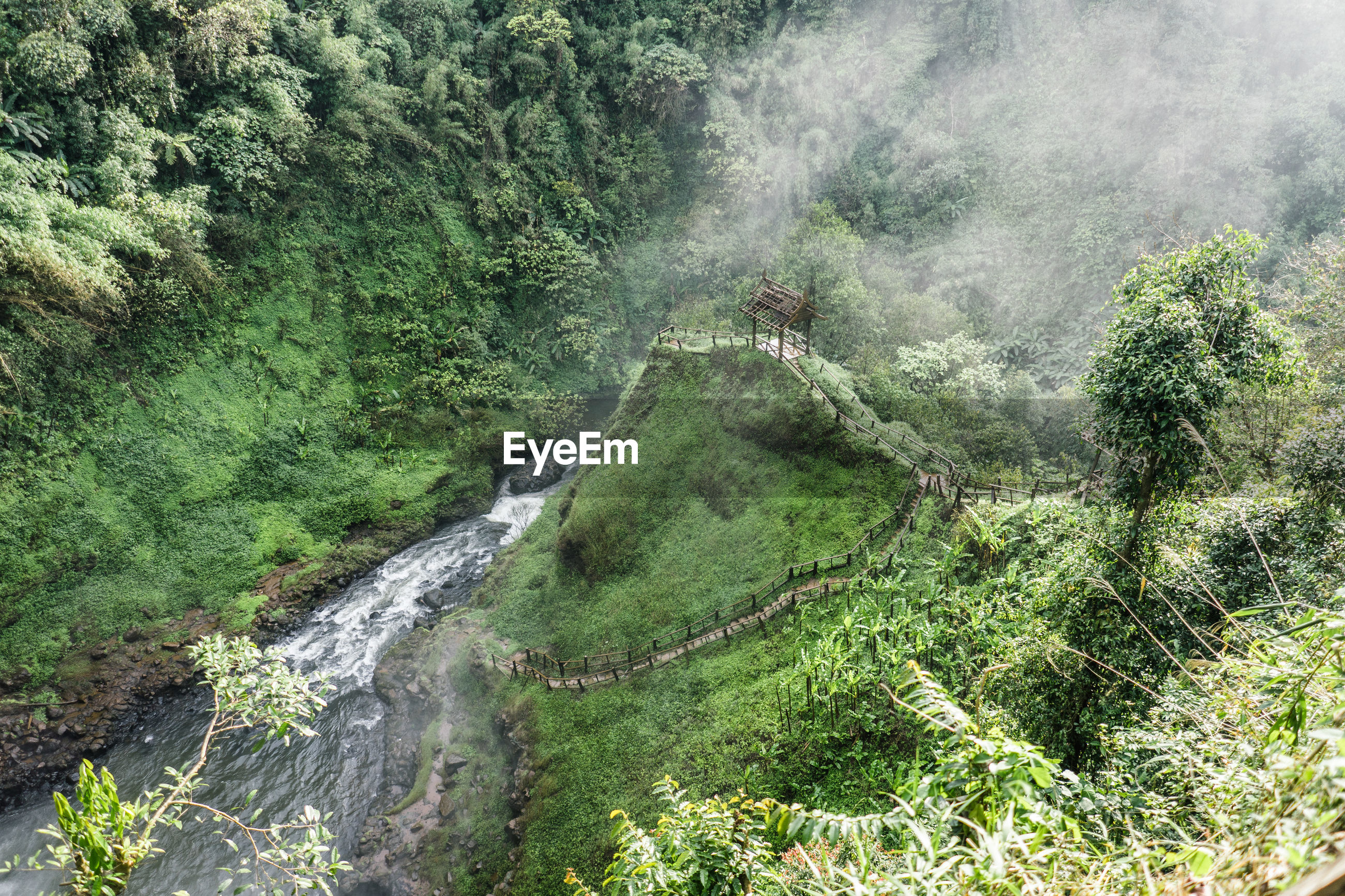 HIGH ANGLE VIEW OF WATERFALL ON FOREST
