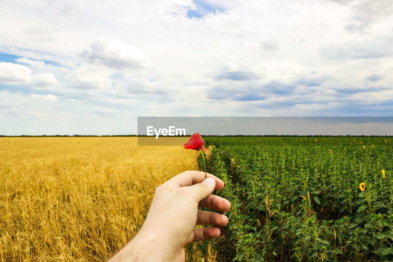Cropped Hand Of Man Holding Poppy On Field Against Cloudy Sky