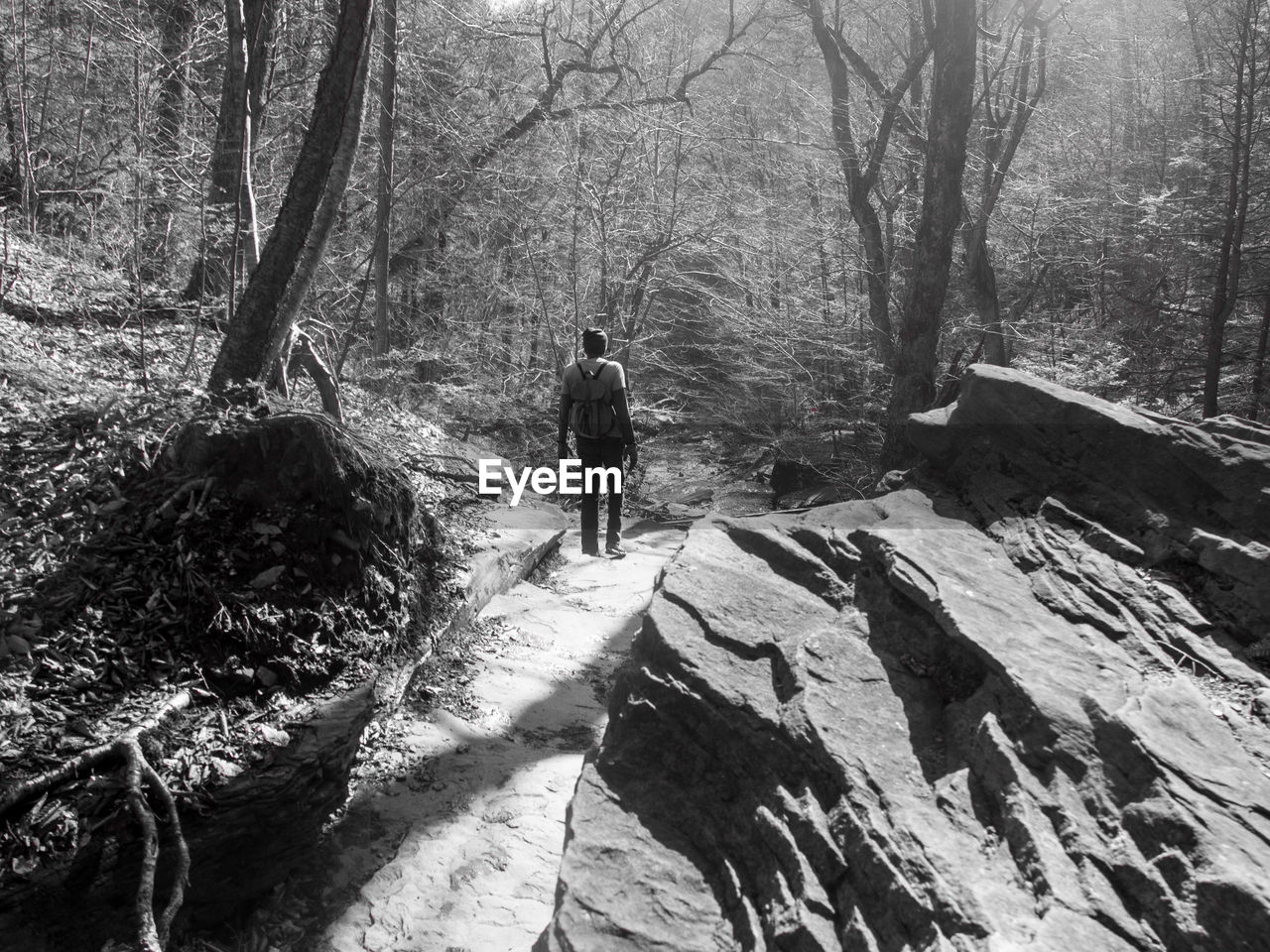 Rear view of man standing on rock in forest during sunny day