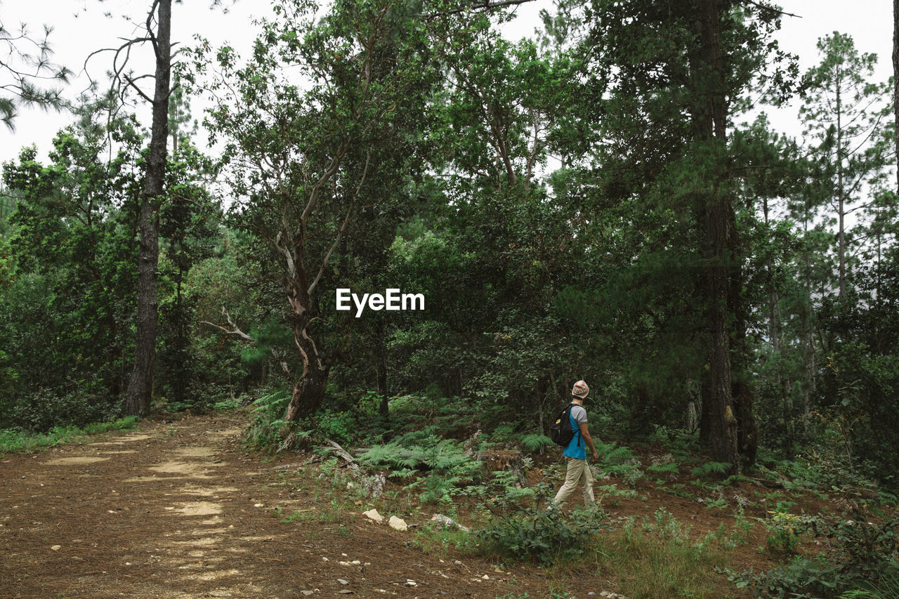 BOY STANDING AMIDST TREES AT FOREST