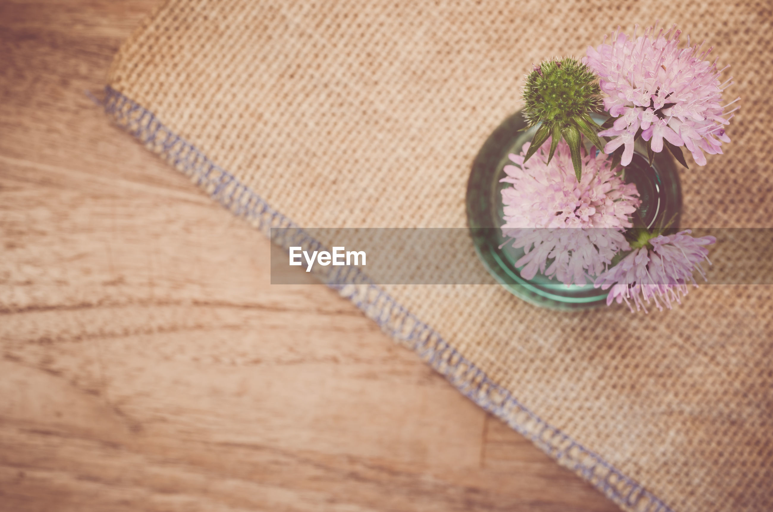 High angle view of flower pot