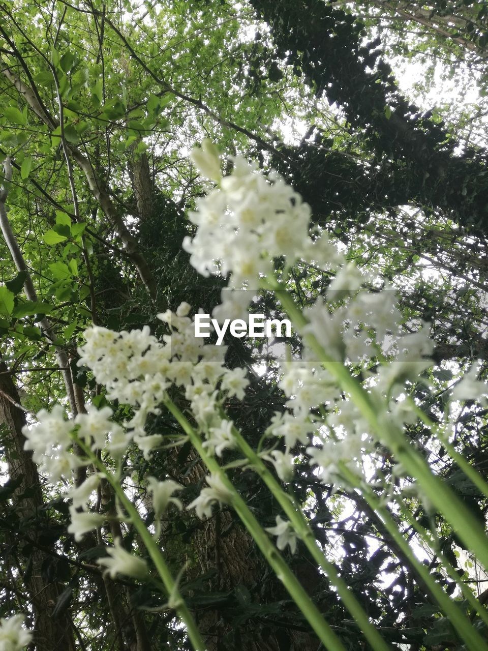 plant, growth, flower, flowering plant, tree, beauty in nature, fragility, vulnerability, branch, freshness, low angle view, day, blossom, no people, nature, white color, springtime, close-up, tranquility, botany, outdoors, spring, cherry blossom