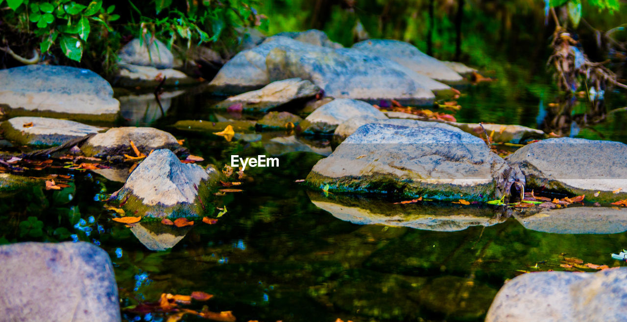 water, nature, reflection, rock - object, beauty in nature, floating on water, outdoors, no people, water lily, leaf, lake, tranquility, day, lotus water lily, flower, close-up, freshness
