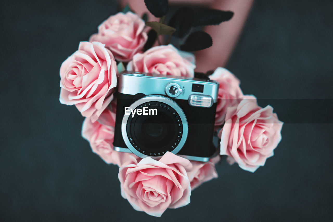 Close-up of camera on pink roses