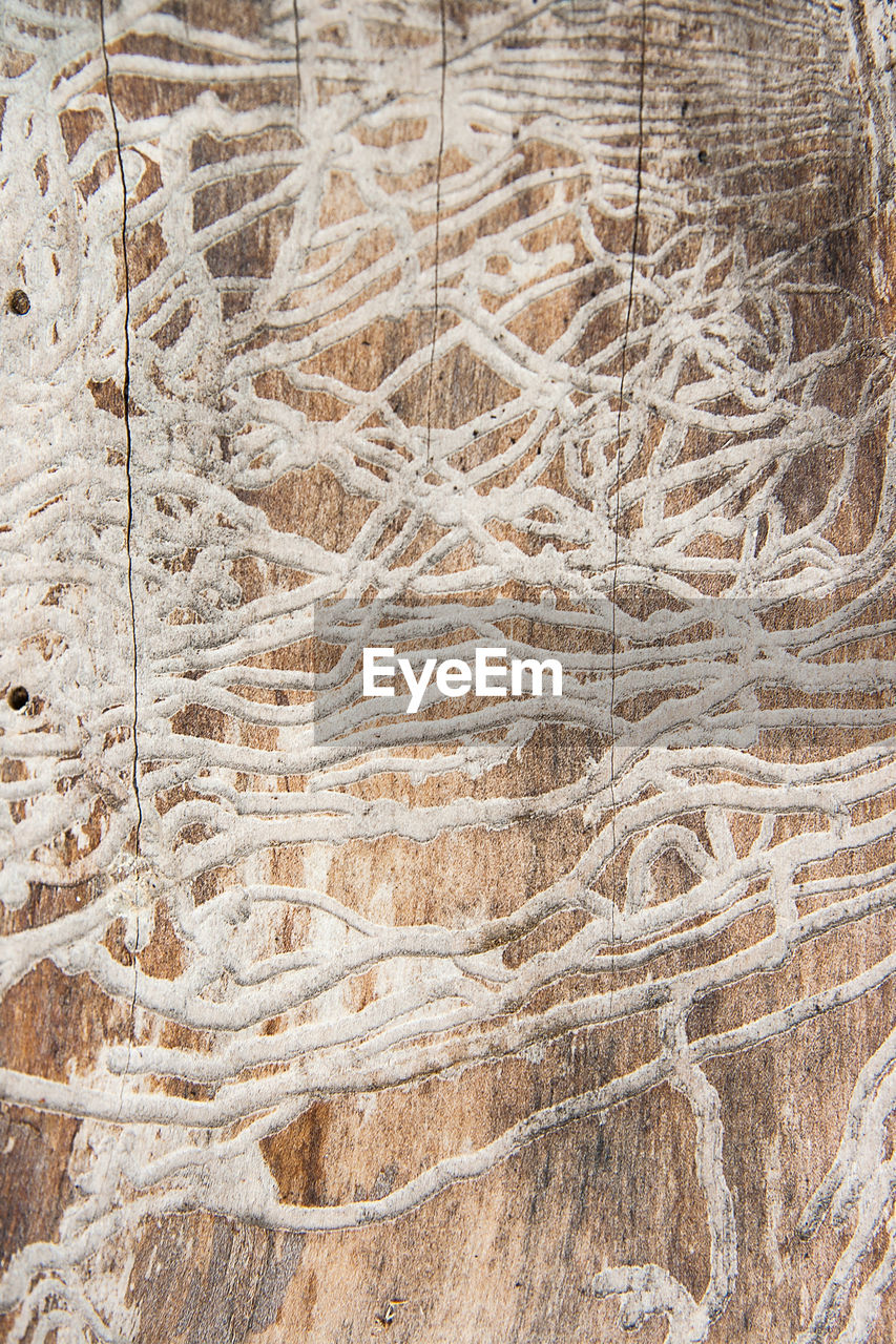 no people, pattern, nature, brown, day, full frame, backgrounds, close-up, plant, high angle view, tree, beauty in nature, tranquility, growth, outdoors, land, natural pattern, cold temperature, winter, dry, arid climate