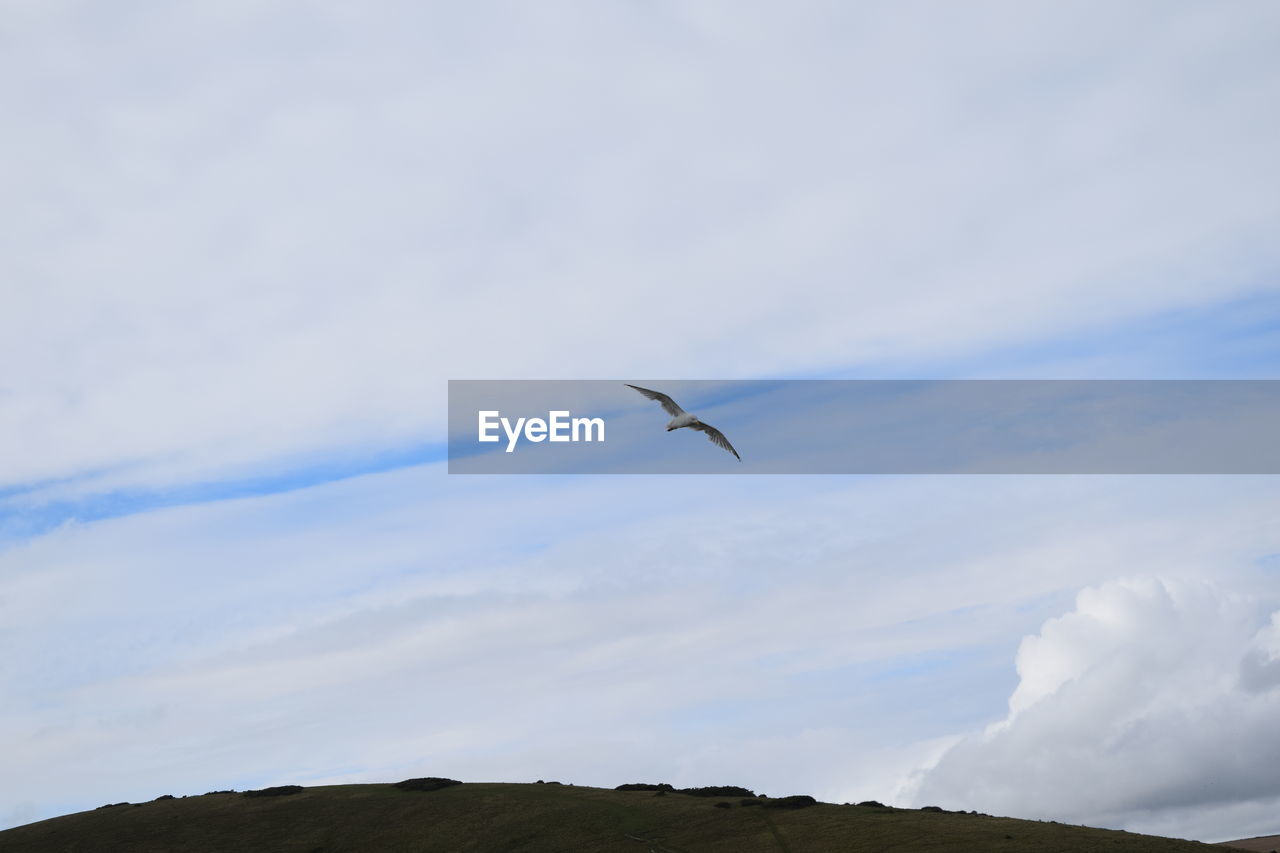 flying, sky, one animal, bird, mid-air, animals in the wild, nature, cloud - sky, animal themes, day, outdoors, animal wildlife, low angle view, beauty in nature, scenics, spread wings, no people