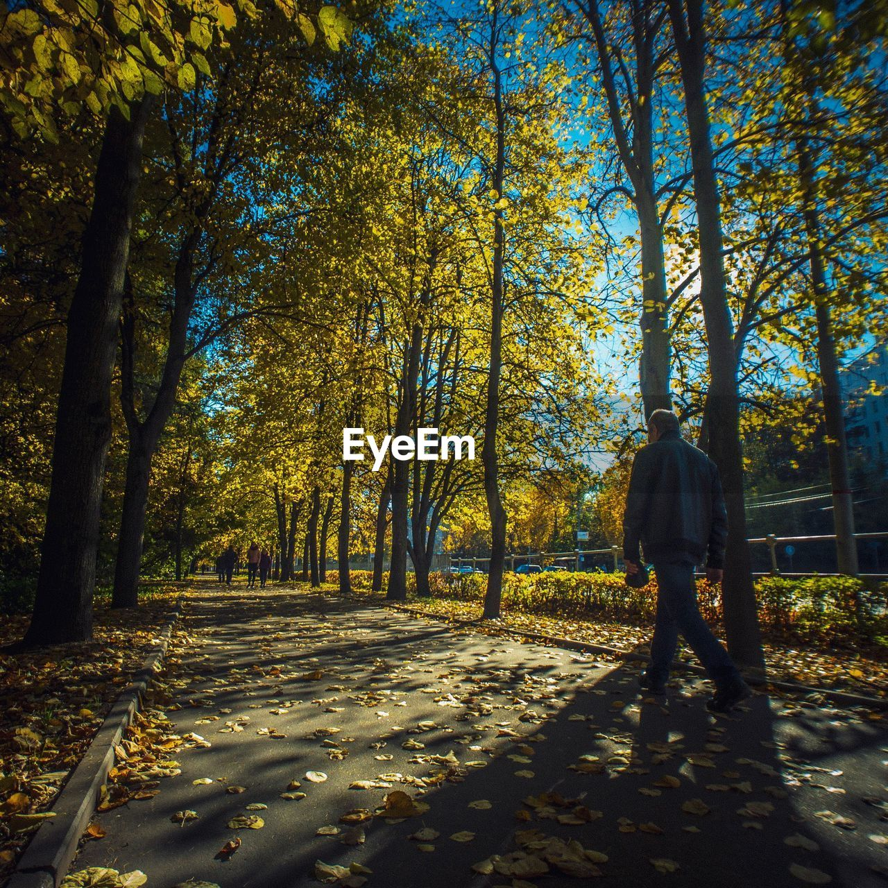tree, plant, real people, autumn, one person, nature, growth, forest, land, lifestyles, change, leisure activity, full length, beauty in nature, leaf, plant part, day, tranquility, sunlight, walking, outdoors, woodland