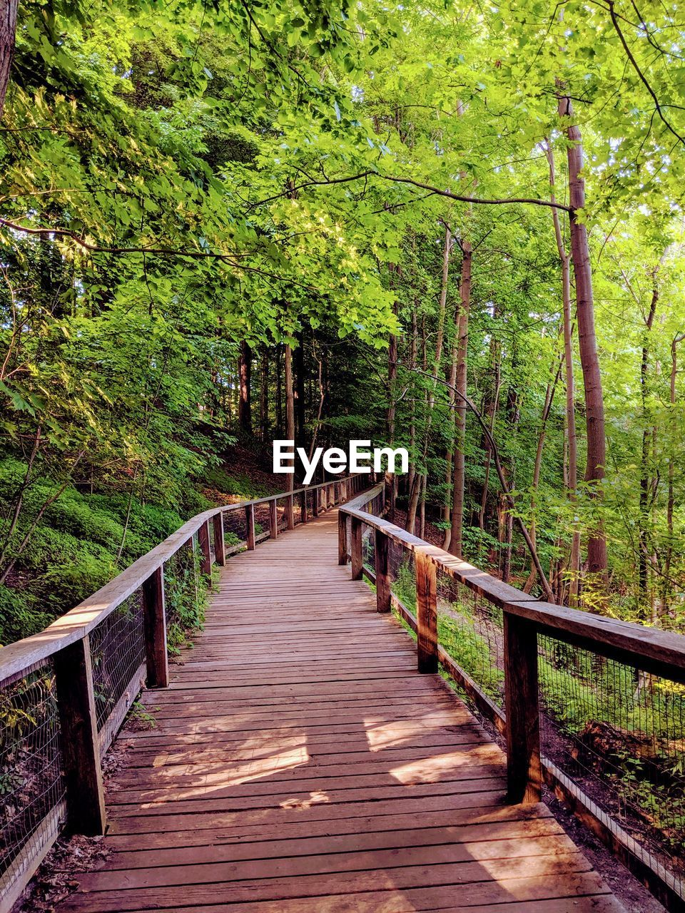 tree, forest, plant, direction, railing, connection, bridge, land, nature, wood - material, footpath, footbridge, the way forward, foliage, growth, bridge - man made structure, tranquility, lush foliage, boardwalk, wood, woodland, outdoors, no people