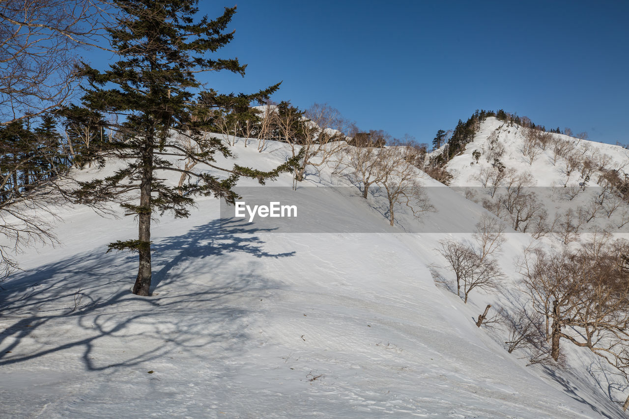 snow, winter, cold temperature, plant, sky, tree, beauty in nature, tranquility, mountain, tranquil scene, scenics - nature, environment, nature, non-urban scene, no people, landscape, covering, clear sky, land, snowcapped mountain