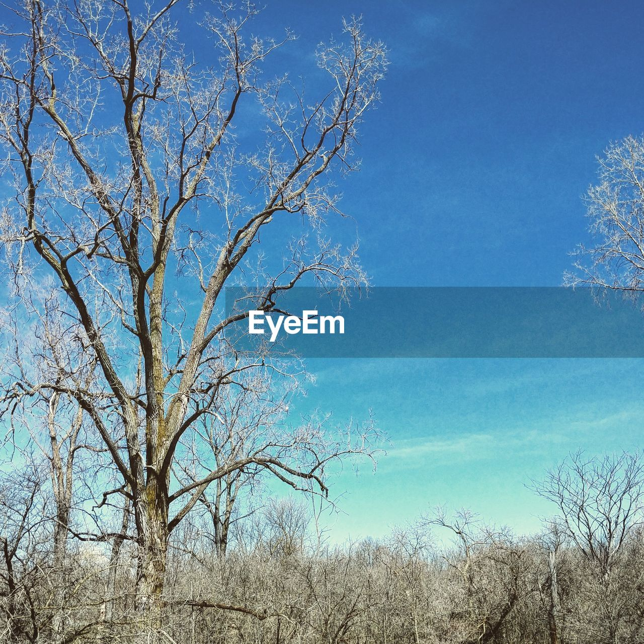 tree, plant, sky, bare tree, blue, branch, nature, tranquility, beauty in nature, day, no people, scenics - nature, outdoors, tranquil scene, clear sky, low angle view, land, non-urban scene, growth, dead plant