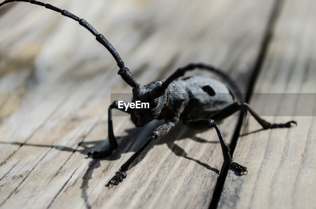 invertebrate, insect, animal, animal themes, one animal, animal wildlife, close-up, animals in the wild, selective focus, no people, beetle, wood - material, animal body part, day, nature, shadow, black color, sunlight, high angle view, table