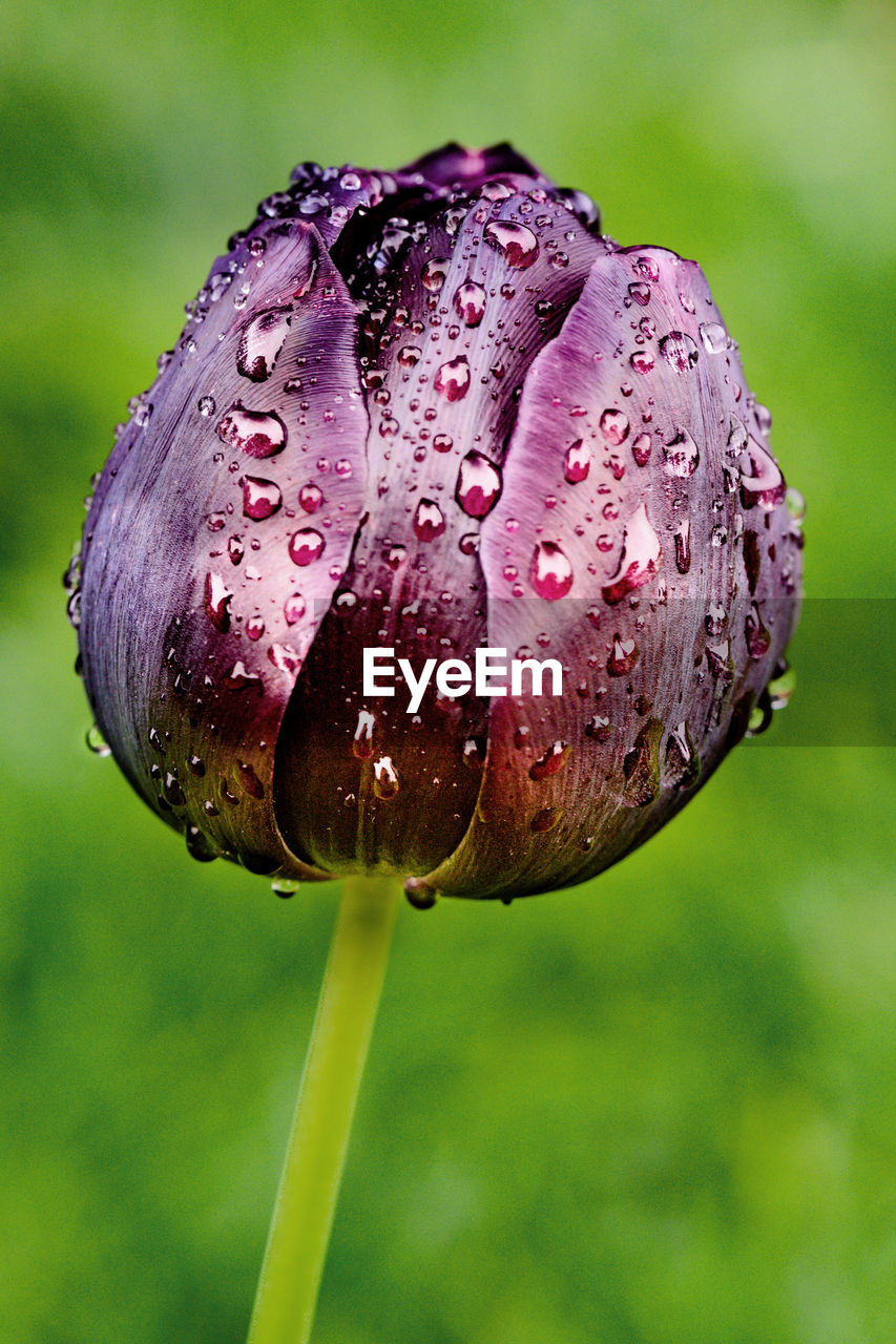 drop, wet, nature, water, fragility, beauty in nature, close-up, focus on foreground, growth, raindrop, flower, freshness, plant, no people, day, outdoors, flower head