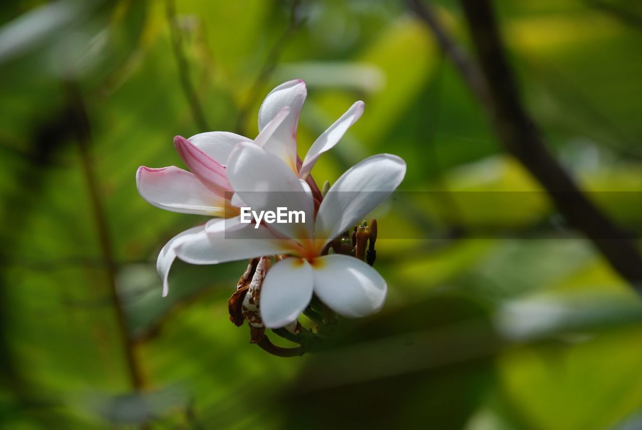 plant, flower, flowering plant, beauty in nature, growth, fragility, freshness, vulnerability, petal, close-up, flower head, white color, no people, inflorescence, selective focus, nature, focus on foreground, day, springtime, botany, pollen