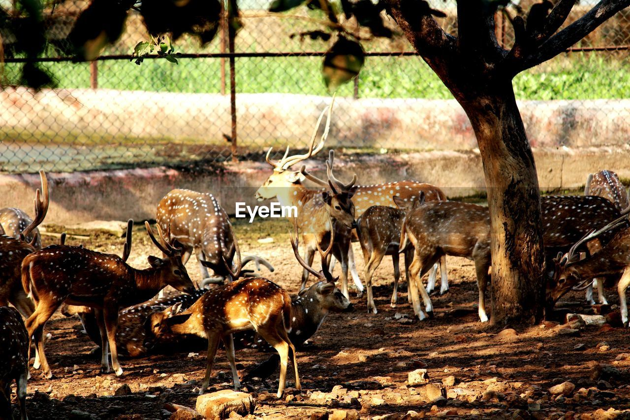 animal themes, animals in the wild, animal wildlife, mammal, deer, large group of animals, nature, field, outdoors, no people, day, stag, tree