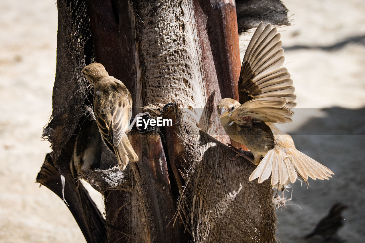 animal, animal wildlife, animal themes, bird, animals in the wild, vertebrate, one animal, focus on foreground, day, nature, no people, flying, spread wings, outdoors, tree, bird of prey, sunlight, close-up, eagle